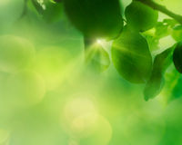 Fundo da folha da maçã da mola Foto de Stock Royalty Free