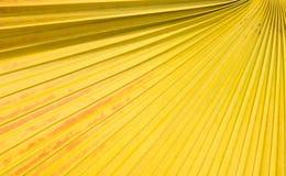 Fundo da folha de palmeira do açúcar Foto de Stock Royalty Free