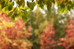 Fundo da folhagem de outono Fotografia de Stock