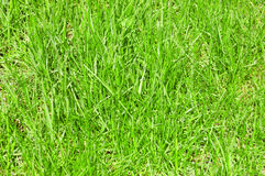 Fundo da grama Foto de Stock