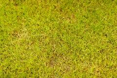 Fundo da grama no close up fotos de stock royalty free