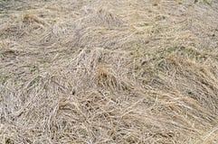 Fundo da grama seca do ano passado Fotos de Stock Royalty Free