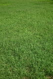 Fundo da grama verde fotos de stock royalty free