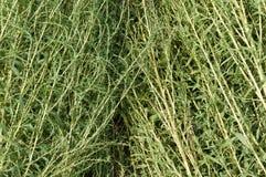 Fundo da grama verde Imagens de Stock Royalty Free
