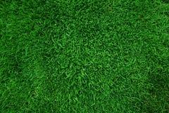 Fundo da grama verde Fotografia de Stock