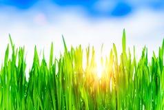 Fundo da grama verde Fotografia de Stock Royalty Free