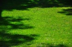Fundo da grama verde Imagem de Stock