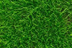 Fundo da grama verde Close-up da grama verde fresca Fundo para as inscrição Imagem de Stock Royalty Free