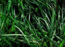 Fundo da grama verde com gotas de orvalho imagens de stock