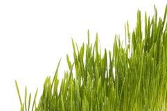 Fundo da grama verde da mola. imagem de stock