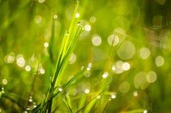 Fundo da grama verde do borrão Imagens de Stock Royalty Free