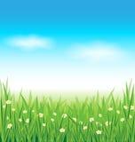 Fundo da grama verde e do céu azul Imagens de Stock