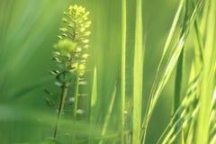 Fundo da grama verde no campo em um dia brilhante Foto de Stock Royalty Free