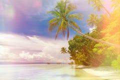 Fundo da ilha de Paradise - paisagem da praia tropical - oceano calmo, palmeiras, céu azul foto de stock
