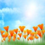Fundo da luz do sol com flor Fotos de Stock