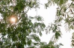 Fundo 242 da luz solar Foto de Stock