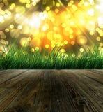 Fundo da luz solar da manhã Imagens de Stock Royalty Free