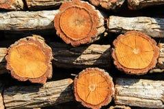 Fundo da madeira Foto de Stock