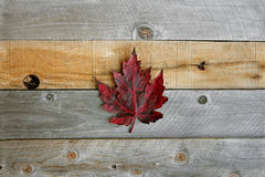 Fundo da madeira de Autumn Maple Leaves Framing Rustic Fotografia de Stock