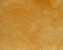 Fundo da madeira de vidoeiro Imagem de Stock