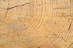 Fundo da madeira recentemente cortada Foto de Stock Royalty Free