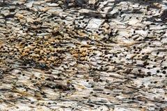 Fundo da madeira da tração madeira mar-tratada fotografia de stock