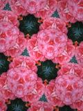 Fundo da mandala das rosas foto de stock royalty free