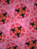 Fundo da mandala das rosas fotos de stock royalty free