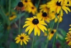 Fundo da mola com as flores amarelas bonitas Foto de Stock Royalty Free