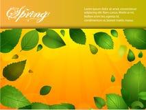 Fundo da mola com folhas e luz do sol Imagens de Stock Royalty Free