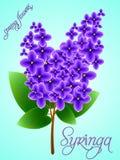 Fundo da mola com o lilás de florescência bonito Vetor Fotografia de Stock Royalty Free