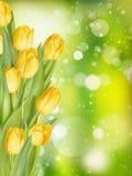 Fundo da mola com tulipas Eps 10 Imagem de Stock Royalty Free