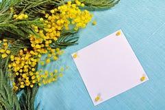 Fundo da mola - o cartão branco com espaço livre para o texto na mimosa floresce Imagem de Stock Royalty Free