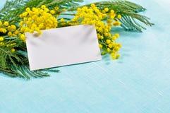 Fundo da mola - o cartão branco com espaço livre para o texto na mimosa floresce Foto de Stock