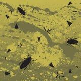 Fundo da mosca e da barata Imagem de Stock