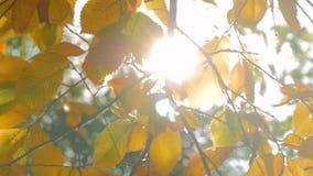 Fundo da natureza com folha vídeos de arquivo