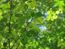 Fundo da natureza com folhas verdes fotografia de stock