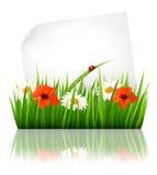 Fundo da natureza com grama e uma folha de papel. Fotos de Stock Royalty Free