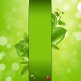Fundo da natureza com joaninha e folhas Imagem de Stock