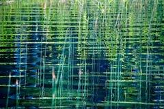 Fundo da natureza com junco litoral e sua reflexão ondulada em w imagem de stock