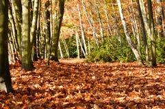 Fundo da natureza da estação do outono das folhas Imagens de Stock Royalty Free