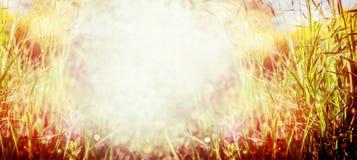 Fundo da natureza da grama do por do sol Prado do verão ou do outono Foto de Stock
