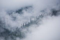 Fundo da natureza da névoa Fotografia de Stock Royalty Free