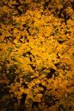 Fundo da natureza das árvores da queda das folhas de outono Imagem de Stock Royalty Free