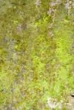 Fundo da natureza de Grunge do líquene e do musgo Foto de Stock