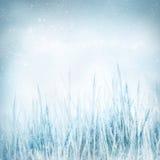 Fundo da natureza do inverno com grama congelada fotos de stock royalty free