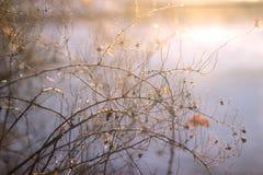 Fundo da natureza do inverno Contexto do feriado do Natal, ramo de árvore congelado Imagem de Stock Royalty Free