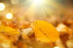 Fundo da natureza do outono Fundo outonal abstrato da queda foto de stock royalty free