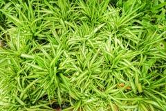 Fundo da natureza da luz pequena - planta verde no jardim home Fotografia de Stock Royalty Free
