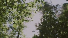 Fundo da natureza O brilho bonito de Sun com do sopro no verde da árvore do vento sae video estoque